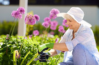 senior woman with garden pruner and allium flowers