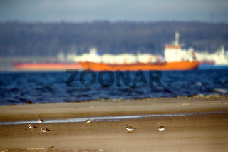 Birds on the background of the sea terminal