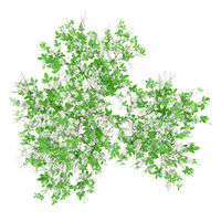 top view of flowering orange tree isolated on white background. 3d illustration