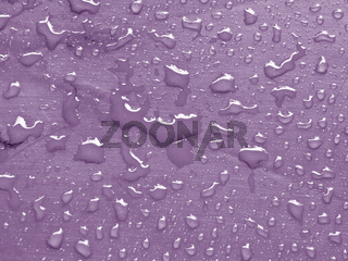 water drops on crocus petal colored metallic surface