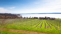 winter scenery vineyard at Lake Constance Germany
