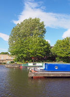 old narrow boats converted to houseboats moored in the marina at brighouse basin in west yorkshire surrounded by trees and a bright sunny blue sky
