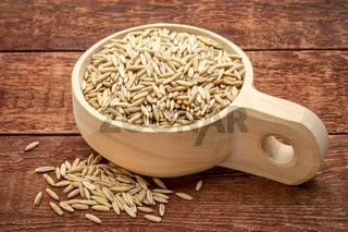 oat groats in wooden scoop