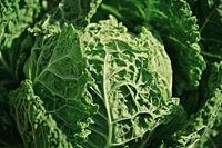 green organic kale close up