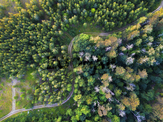 Aerial view from the drone of road through the forest in the summer.