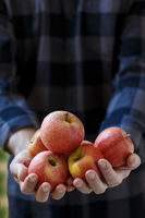 Man holding red ripe apples