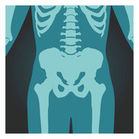 X-ray shot of pelvis and spinal column, human body bones, radiography, vector illustration.