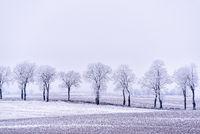 Allee im Winter in Masuren