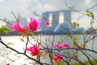 Flowers Singapore Marina Bay