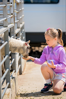 Little cute girl feeding sheep on a farm