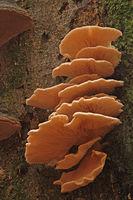Pilz an einem Baumstamm