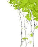 Birch trees vector card