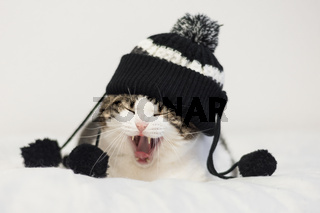 Funny cat yawning ready to sleep, wearing a warm hat with pompon. Lying  on a blanket. Winter season concept.