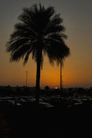 Silhouette against palm tree in Dubai, UAE