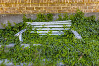 Wooden bench with lush vegatation, middle