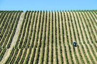 Mechanisierte Feldarbeit mit Traktor auf einer Plantage mit vertikalem Anbau von Rebstöcken,Portugal