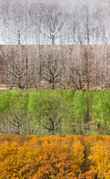 panoramic views of forest in four seasons
