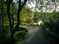 Foot path in the green nature next to a lake