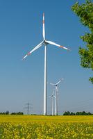 Windräder in einem blühenden Rapsfeld