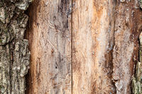 pine tree trunk with peeled bark close up