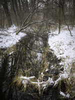 Small stream through woodland in winter
