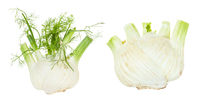 two ripe Florence fennel stalks isolated