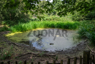 Small water pond in Banstead woods