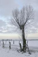 Wiesen und Weiden im Schnee... Bislicher Insel * Nordrhein-Westfalen *, Winterstimmung