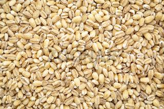 pearl barley grain background
