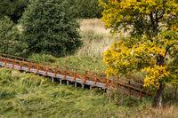 Holzbrücke über Feuchtwiese im Harz