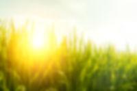 Blur background paddy field