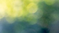 Abstract green yellow blurred bokeh background. Beautiful layout