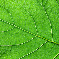 Detailed macro photo of green leaf with veins. Natural background for your ideas. Flat lay