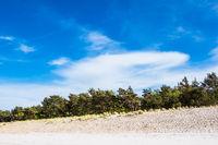Küstenwald an der Ostseeküste in Prerow