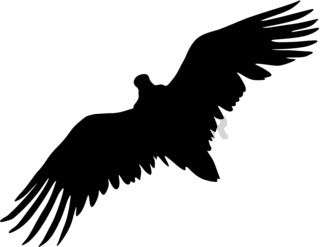 Silhouette beautiful eagle on a white background