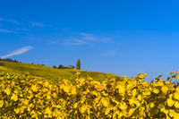 Herbstliche Weinberge im Weinbaugebiet La Côte bei Bougy-Villars, Waadt, Schweiz