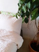 bedroom white linen and green house plant, modern design close-up