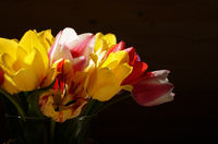 Bunch of Colorful tulip flowers in glass vase on wooden table background with space for text