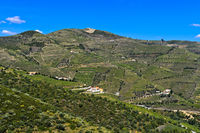 Weinberg in der Portweinregion Alto Douro bei Pinhao, Douro Tal, Portugal
