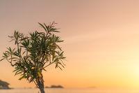 Small tree at sunset