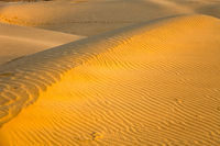 Traces of beetles in the desert