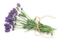 Lavender Flowers Bunch Isolated On White Background