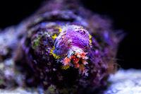 Colorful coral in deep ocean.