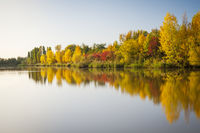 Autumn afternoon light on a lake with colourful trees in Burgenland