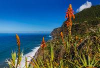 Flowers on coast in Boaventura - Madeira Portugal