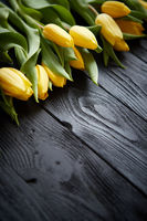 Beautiful yellow tulips on black rustic wooden background. Top view