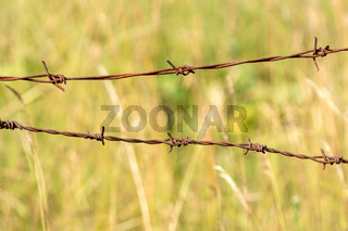 The old barbed wire
