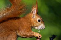 1 BA Eichhörnchen im Garten.jpg