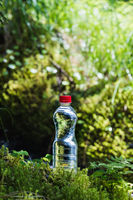 Transparent plastic A bottle of clean water with a red lid stands in the grass and moss on the background of the luscious greenery of the spring forest. The concept of pure natural drinking water
