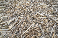 background of drift wood on river shore